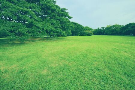 Photo pour Parks and green trees in spring. Nature background - image libre de droit