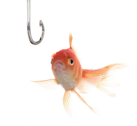 A surprised goldfish looking at a hook.