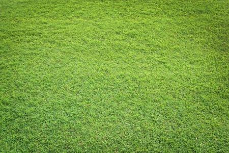 pattern of green grass field