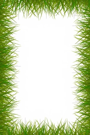 attractive grass frame on white background.