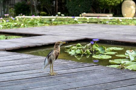Balance between nature and human bird