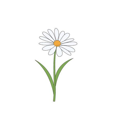 Illustration pour Cartoon daisy. Simple flower on white background. Vector illustration. - image libre de droit