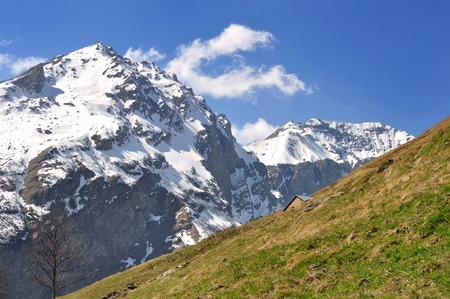 snowy peak mountain behind meadow in spring