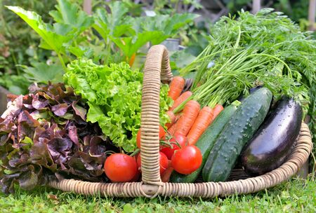 Photo for basket full of fresh vegetables in front of a vegatable garden - Royalty Free Image