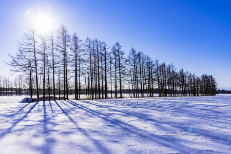 Photo pour Landscape with snow in in Hokkaido, Japan - image libre de droit