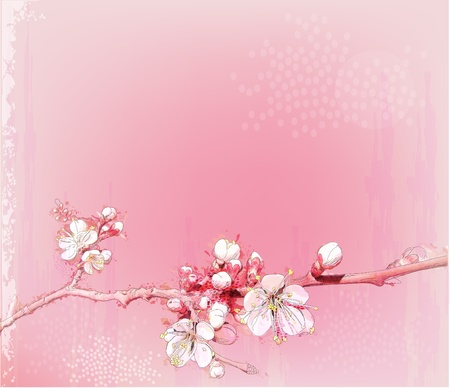 japanese cherry blossoms in full bloom