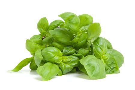 fresh basil plant in closeup isolated on white background