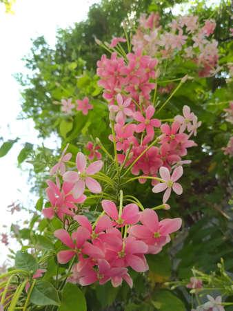 Sansakphoto200700068