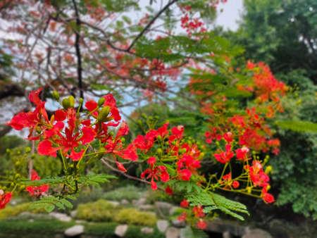 Sansakphoto200700200