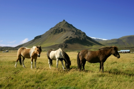 Three horses with the volcanic mountain Stapafell in the background in Snaefellsnes, Iceland