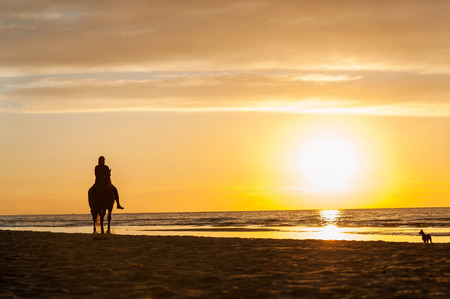 Horseriding at the beach on sunset background. Baltic sea. Multicolored summertime outdoors horizontal image.