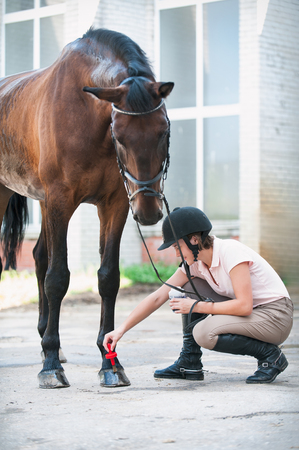Groomer horsewoman taking care of chestnut horse hoof. Outdoors multicolored Vertical image with filter