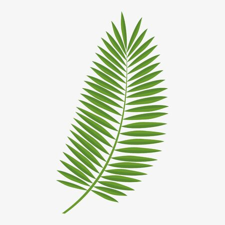 Illustration pour Vector graphics, green palm leaf.Graphics element. - image libre de droit