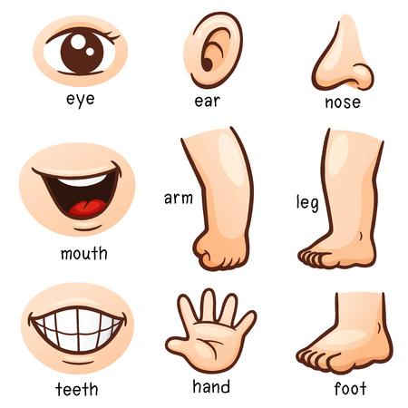 Ilustración de illustration of Vocabulary part of body - Imagen libre de derechos