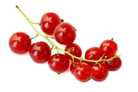 Branch of a red currant on a white background