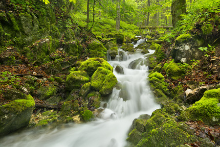 A waterfall in a lush gorge in Slovensk Raj in Slovakia.