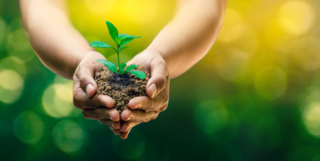 Foto per In the hands of trees growing seedlings. Bokeh green Background Female hand holding tree on nature field grass Forest conservation concept - Immagine Royalty Free