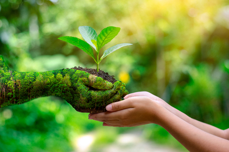 Foto per environment Earth Day In the hands of trees growing seedlings. Bokeh green Background Female hand holding tree on nature field grass Forest conservation concept - Immagine Royalty Free