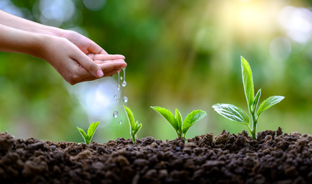 Foto de In the hands of trees growing seedlings. Bokeh green Background Female hand holding tree on nature field grass Forest conservation concept - Imagen libre de derechos