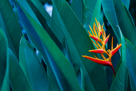 Foto de tropical leaves colorful flower on dark tropical foliage nature background dark green foliage nature - Imagen libre de derechos