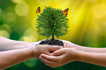 Photo pour environment Earth Day In the hands of trees growing seedlings. Bokeh green Background Female hand holding tree on nature field grass Forest conservation concept - image libre de droit