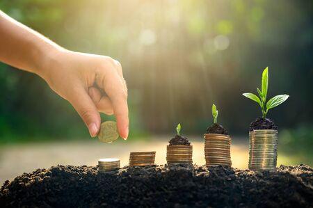 Photo pour Money growth Saving money. Upper tree coins to shown concept of growing business - image libre de droit