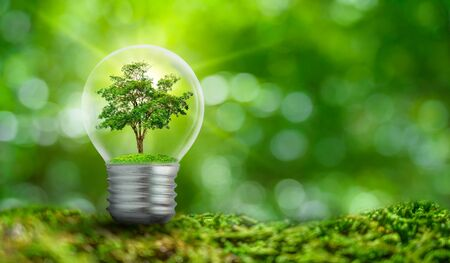 Photo for The bulb is located on the inside with leaves forest and the trees are in the light. Concepts of environmental conservation and global warming plant growing inside lamp bulb over dry - Royalty Free Image