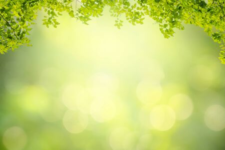Foto de Leaf background bokeh blur green background - Imagen libre de derechos