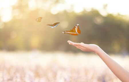 Photo pour The girl frees the butterfly from the jar, golden blue moment Concept of freedom - image libre de droit