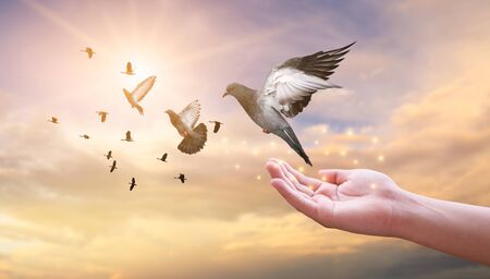 Photo for The woman hands free the pigeon into the sky. - Royalty Free Image
