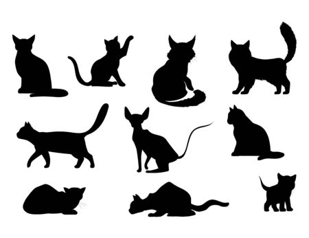 Illustration pour Cat icon. Vector illustration of a pet - image libre de droit