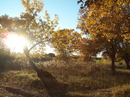 Autumn in bosque with setting sun