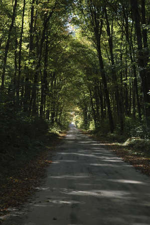 A shaded road through the woods.