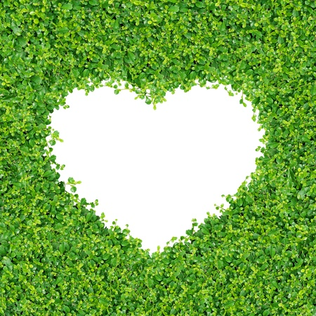 Foto de Small green plants and grass A heart shape. on on white background isolated - Imagen libre de derechos