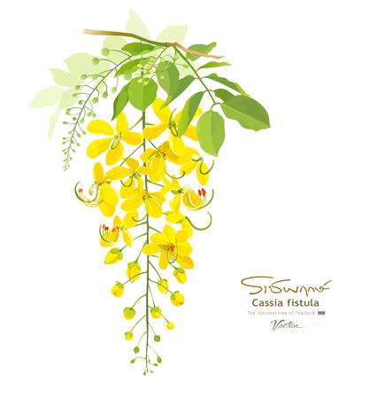 National flower of thailand Cassia Fistula