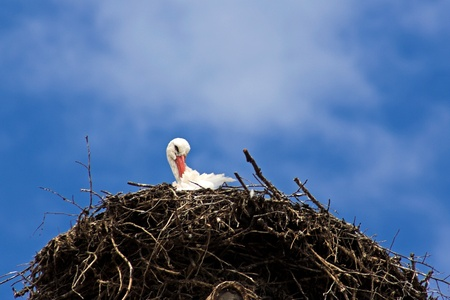 A stork in the nest with a blue sky