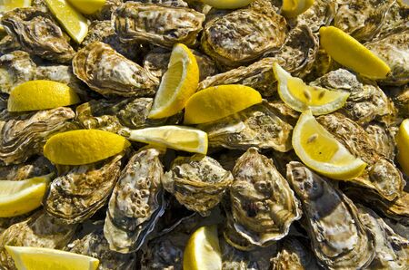Photo pour Raw oysters decorated with pieces of lemon in French tradition Oyster Culture - image libre de droit