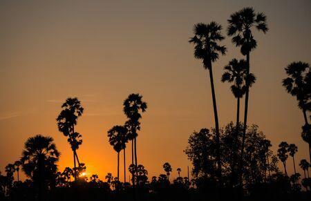 Photo pour sunset almost night at palm forest - image libre de droit