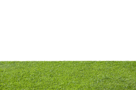 Foto per Green grass isolated on white background - Immagine Royalty Free