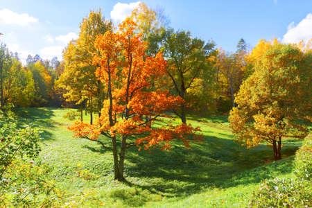 Photo pour Autumn landscape with yellow trees - image libre de droit