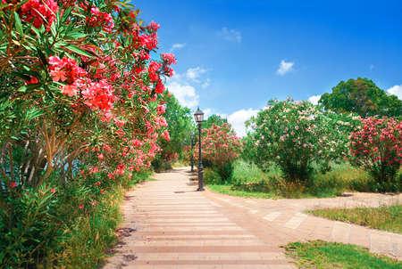 Foto de City park with oleander bushes - Imagen libre de derechos