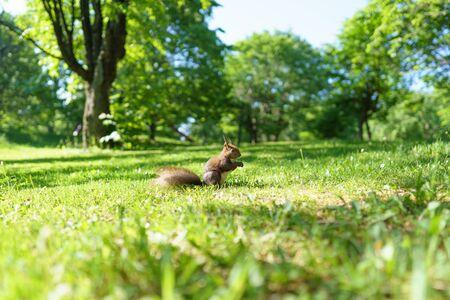 Foto de one squirrel on green grass - Imagen libre de derechos