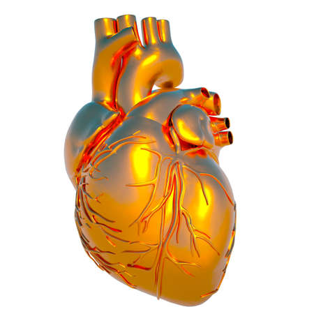 Model of human heart - heart of gold