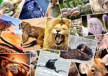 Photo for Different animals collage - Royalty Free Image