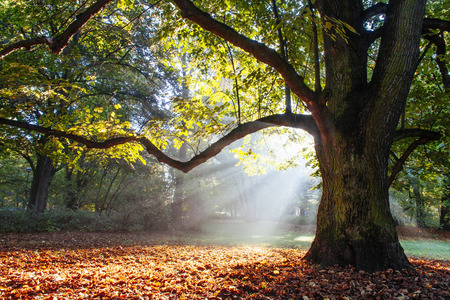 mighty oak tree