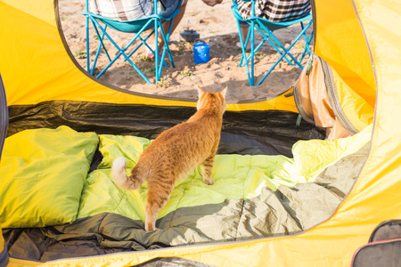 Photo for Pet, tourism and nature concept - Cute cat sitting near yellow tent - Royalty Free Image