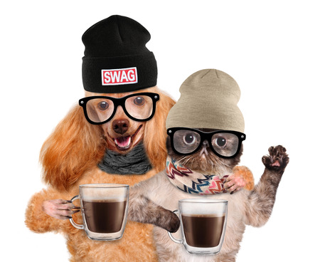 Dog with a cat holding in the paws of a cup of cocoa.