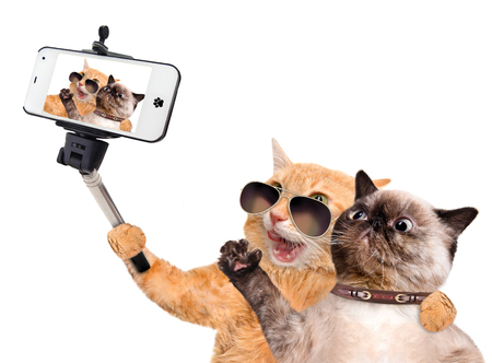 Cats taking a selfie with a smartphone. Isolated on white.