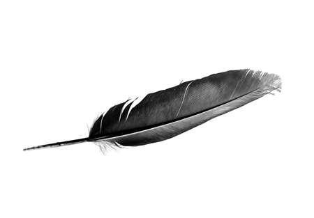 Photo pour Dove Feather isolated bird feather on a white background - image libre de droit