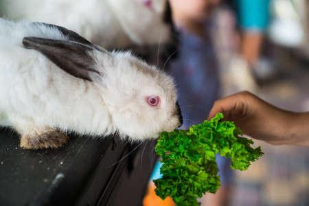 Foto de white rabbit eating out of children's hands. props a magician for a performance at the festival for children. - Imagen libre de derechos